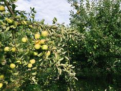 Apple picking and the End of the Whole30
