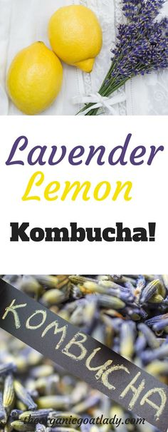 Do you flavor your own Kombucha or would you like to learn how? Then you are going to love this Lemon Lavender Kombucha Recipe! Lavender Lemon Kombucha is. Kombucha Flavors, Probiotic Drinks, Kombucha Probiotic, Jun Kombucha, How To Brew Kombucha, Kombucha Brewing, Fresco, Fermentation Recipes, Lavender