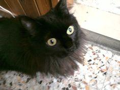 gatta ciccia ( page ) fb
