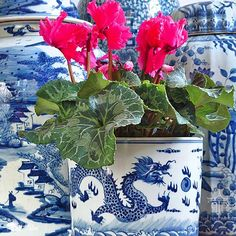 SnapWidget | Red cyclamen at Christmas is one of my favorites -- especially paired with blue and white! This blue and white dragon planter, along with everything else at shop.thepinkpagoda.us, is 15% off through the week. Click through the link in my profile to see more pretty blue and white for Christmas.