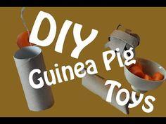 DIY Guinea Pig Toys - YouTube