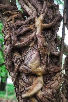 Tortured & possessed faerie tree ~ DO NOT TOUCH! ~