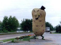 Harvey's Big Potato, Maugerville, NB Fresh farm produce near Fredericton. Potato Man, Tomorrow News, I Am Canadian, Canada Images, Prince Edward Island, New Brunswick, Small Island, Canada Travel, Larger