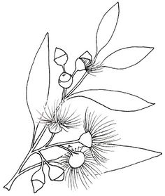 Free Printable Gumnut blossoms are iconically Australian and the inspiration for the very famous (at least Down Under ) children& b. Leaf Outline, Flower Outline, Flower Art, Australian Wildflowers, Australian Native Flowers, Embroidery Flowers Pattern, Flower Patterns, Felt Embroidery, Embroidery Designs
