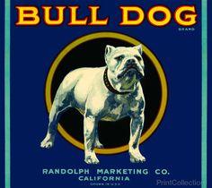 Bull Dog Brand
