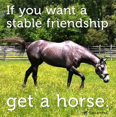 If you want a stable friendship get a horse.