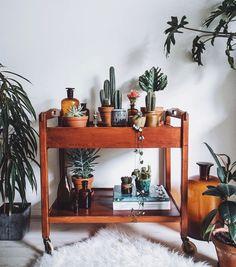 A decoração de interiores pede plantas