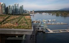 The Vancouver, BC Convention Center's six acre living roof, the largest green roof in Canada. (10/9/2014)