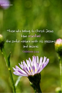 Bible verse - those who belong to Christ Jesus have crucified the sinful nature with its passion and desires - Gal