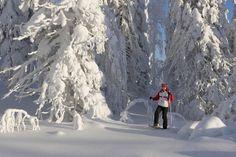 Snowshoing in Ukkohalla, Kuhmo Finland   Flickr - Photo Sharing!