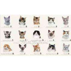 Panel de gatos sobre blanco