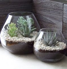 Creative succulents with mini cactus