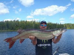 "Muskellunge, also called some sort of ""Musky"" are usually one of the most fascinating freshwater game seafood out there. A new musky is really a huge seafood along with might achieve the size of pretty much all 5 ft."