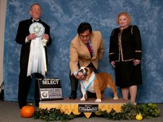 I am an AKC Judge, AKC Breeder of Merit, and Hall of Fame Bulldog Breeder. I…