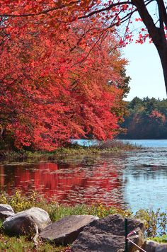 New England looks absolutely gorgeous in the fall! Goodbye Ohio, I'll be in New England this season! I wish...
