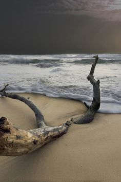 """""""Bring me back to the sea"""". Winter sea on Italian beach. http://www.exquisitecoasts.com/"""