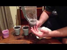 ▶ How to grow peach, plum and nectarine from cuttings (Part 1) . - YouTube
