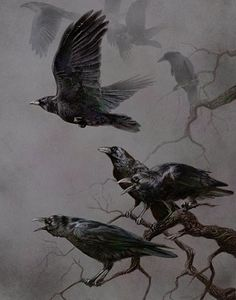 One crow sorrow, Two crows joy, Three crows a letter, Four crows a boy, Five crows silver, Six crows gold, Seven crows a story yet to be told...