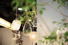 【アラウンド インテリア~植物編~】春夏の植物インテリアpart1