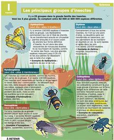les principaux gr d insectes