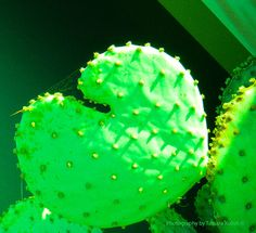 Green Heart Cactus with Spider Web 1; the color has been digitally enhanced to make a statement with others in the series.