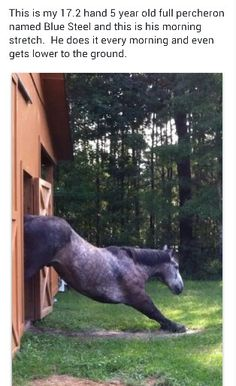 Actually, this is not my horse, and I do not know who uploaded it the first time. But he is a lovely percheron.