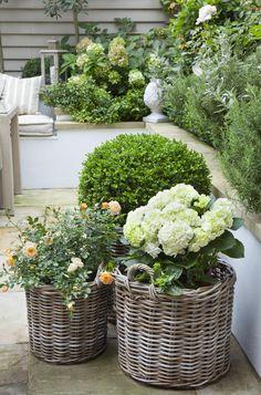 Leopoldina Haynes's garden: plants in baskets