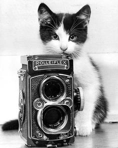 Kitten & a Rolleiflex camera, Old fashioned b photos and ads. Crazy Cat Lady, Crazy Cats, Rolleiflex Camera, Photo Chat, Cat Photography, Vintage Photography, White Cats, Vintage Cameras, Vintage Cat