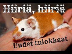 Haettiin hiiriä Jyväskylästä