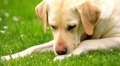 8 Common Household Chemicals Harming your Pets, & their Non-Toxic Alternatives