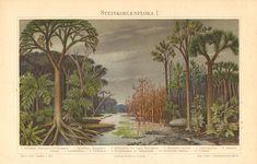 1897 Earliest Land Plants, Carboniferous Landscape, Ferntree, Megaphyton, Calamites, Scale-tree, Ulodendron, Sigillaria Antique Lithograph