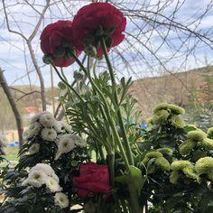 #bahçeçiçeği #flowersgarden #gardenflowers #kesikkavak #haymana #ankara