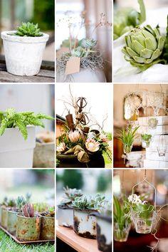 KAMERS 2008 by @Christine Meintjes on @The Pretty Blog Plants In Jars, Cactus Plants, Pothos Plant, Plant Guide, Pet Safe, Xmas Ideas, Picnics, Herb Garden, Pretty Flowers