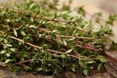 Le thym est la plante aromatique idéale pour lutter contre les infections de l'hiver ! Antiseptique, antispasmodique et expectorant, il aide à soulager le rhume et est particulièrement efficace pour protéger le système respiratoire. Découvrons de plus près les bienfaits de cette herbe étonnante.