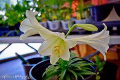Mommy plus Five: April 14, 2015 - Indoor Gardening 101