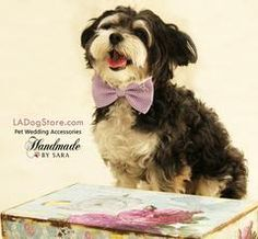 Purple dog bow tie, Bow tie attached to dog collar, Pet wedding accessory, dog birthday gift,Dog collar, Lavender, heart - LA Dog Store  - 1