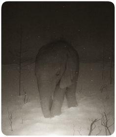 Ryan Salge...Cool pic. <3 elephants