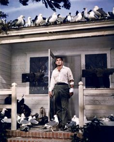 "Rod Taylor in ""The Birds"" (1963). COUNTRY: United States. DIRECTOR: Alfred Hitchcock."