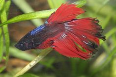 Eros is mostly red now!
