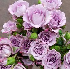 Best Indoor Garden Ideas for 2020 - Modern Diy Wedding Bouquet, Diy Wedding Flowers, Flower Diy, Wedding Stuff, Wedding Ideas, Lavender Flowers, Purple Flowers, Colorful Roses, Rose Flowers