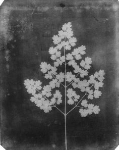 William Henry Fox Talbot.
