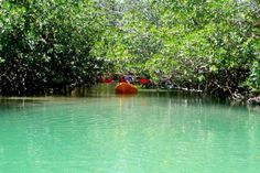 Indian River Lagoon Mangrove Jungle Tour in Fort Pierce / Ft. Pierce, Florida
