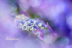 "Instagram의 TRANSFER VISIONS Flowers님: ""Presents . Featured Artist: @takashima0724 Congratulations! ________________________________________ ▪ TRANSFER VISIONS Flowers…"""