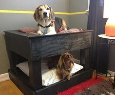Need ideas for functional dog crates? Or you're just looking to be a more fabulous dog owner. Check out these DIY dog crates that will definitely make your po