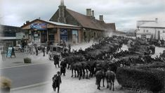 The horses that went to war World War One, First World, Stockton On Tees, Royal Pavilion, Pet Cemetery, Air Raid, War Dogs, Farm Stay, Live Events
