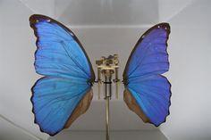 Rebecca Horn (German, b.1944) Butterfly Sculpture, 2008 Mixed Media