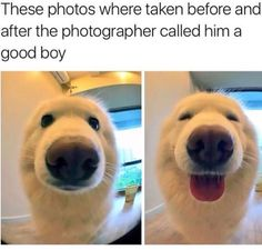 Who's a good boy?