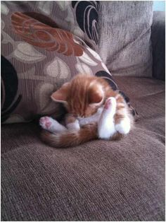 funny CAT business: hilarious SLEEPing positions ; ) crouching tiger