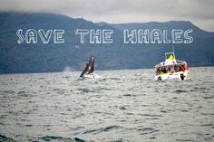 Whale watching Samaná