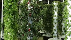 Vertical garden inside O'Hare Airport is a first